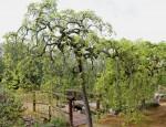 El Jardín Botánico El Arboreto permanecerá cerrado hasta el próximo 31 de agosto