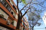 Proteger al árbol. Objetivo en las obras que efectúa Emasesa